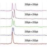 Sistemas Automatizados Eletroforese Capilar GelBot Gráfico